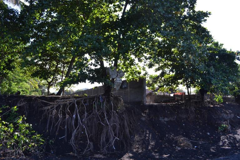 根っこが好き この時の地点/タンココ自然保護区